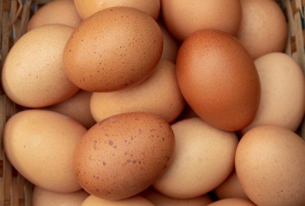 Egg Processing Facility
